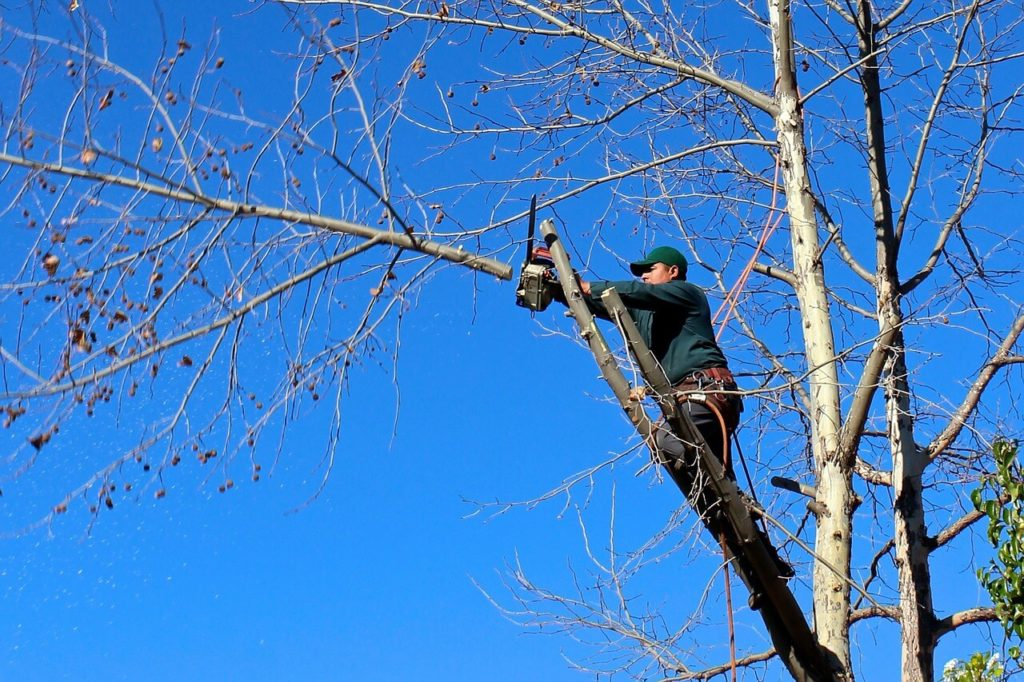 Contact Us-Parkland FL Tree Trimming and Stump Grinding Services-We Offer Tree Trimming Services, Tree Removal, Tree Pruning, Tree Cutting, Residential and Commercial Tree Trimming Services, Storm Damage, Emergency Tree Removal, Land Clearing, Tree Companies, Tree Care Service, Stump Grinding, and we're the Best Tree Trimming Company Near You Guaranteed!