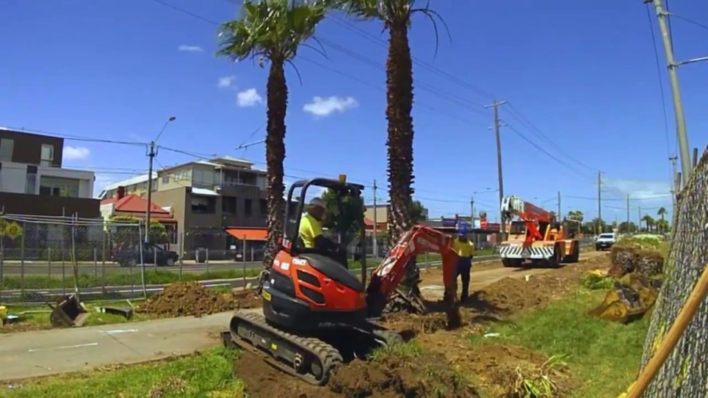 Palm Tree Removal-Parkland FL Tree Trimming and Stump Grinding Services-We Offer Tree Trimming Services, Tree Removal, Tree Pruning, Tree Cutting, Residential and Commercial Tree Trimming Services, Storm Damage, Emergency Tree Removal, Land Clearing, Tree Companies, Tree Care Service, Stump Grinding, and we're the Best Tree Trimming Company Near You Guaranteed!