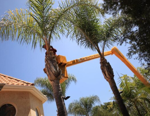 Palm Tree Trimming-Parkland FL Tree Trimming and Stump Grinding Services-We Offer Tree Trimming Services, Tree Removal, Tree Pruning, Tree Cutting, Residential and Commercial Tree Trimming Services, Storm Damage, Emergency Tree Removal, Land Clearing, Tree Companies, Tree Care Service, Stump Grinding, and we're the Best Tree Trimming Company Near You Guaranteed!