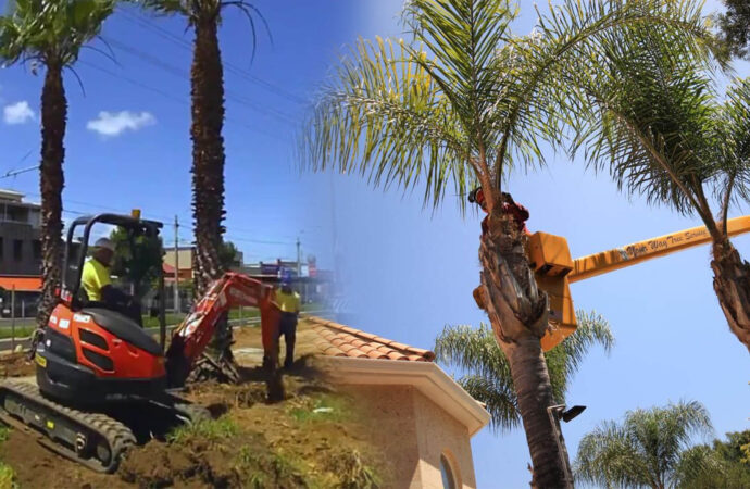 Palm tree trimming & palm tree removal-Parkland FL Tree Trimming and Stump Grinding Services-We Offer Tree Trimming Services, Tree Removal, Tree Pruning, Tree Cutting, Residential and Commercial Tree Trimming Services, Storm Damage, Emergency Tree Removal, Land Clearing, Tree Companies, Tree Care Service, Stump Grinding, and we're the Best Tree Trimming Company Near You Guaranteed!