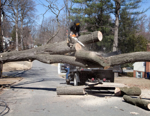 Residential Tree Services-Parkland FL Tree Trimming and Stump Grinding Services-We Offer Tree Trimming Services, Tree Removal, Tree Pruning, Tree Cutting, Residential and Commercial Tree Trimming Services, Storm Damage, Emergency Tree Removal, Land Clearing, Tree Companies, Tree Care Service, Stump Grinding, and we're the Best Tree Trimming Company Near You Guaranteed!