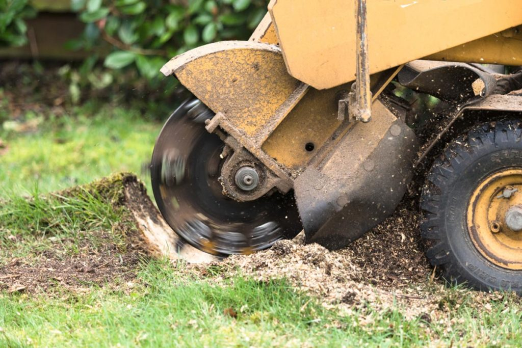 Stump Grinding-Parkland FL Tree Trimming and Stump Grinding Services-We Offer Tree Trimming Services, Tree Removal, Tree Pruning, Tree Cutting, Residential and Commercial Tree Trimming Services, Storm Damage, Emergency Tree Removal, Land Clearing, Tree Companies, Tree Care Service, Stump Grinding, and we're the Best Tree Trimming Company Near You Guaranteed!