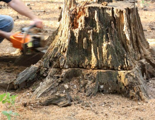 Stump Removal-Parkland FL Tree Trimming and Stump Grinding Services-We Offer Tree Trimming Services, Tree Removal, Tree Pruning, Tree Cutting, Residential and Commercial Tree Trimming Services, Storm Damage, Emergency Tree Removal, Land Clearing, Tree Companies, Tree Care Service, Stump Grinding, and we're the Best Tree Trimming Company Near You Guaranteed!