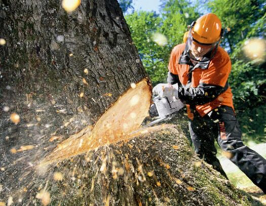 Tree Cutting-Parkland FL Tree Trimming and Stump Grinding Services-We Offer Tree Trimming Services, Tree Removal, Tree Pruning, Tree Cutting, Residential and Commercial Tree Trimming Services, Storm Damage, Emergency Tree Removal, Land Clearing, Tree Companies, Tree Care Service, Stump Grinding, and we're the Best Tree Trimming Company Near You Guaranteed!
