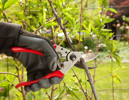 Tree Pruning-Parkland FL Tree Trimming and Stump Grinding Services-We Offer Tree Trimming Services, Tree Removal, Tree Pruning, Tree Cutting, Residential and Commercial Tree Trimming Services, Storm Damage, Emergency Tree Removal, Land Clearing, Tree Companies, Tree Care Service, Stump Grinding, and we're the Best Tree Trimming Company Near You Guaranteed!