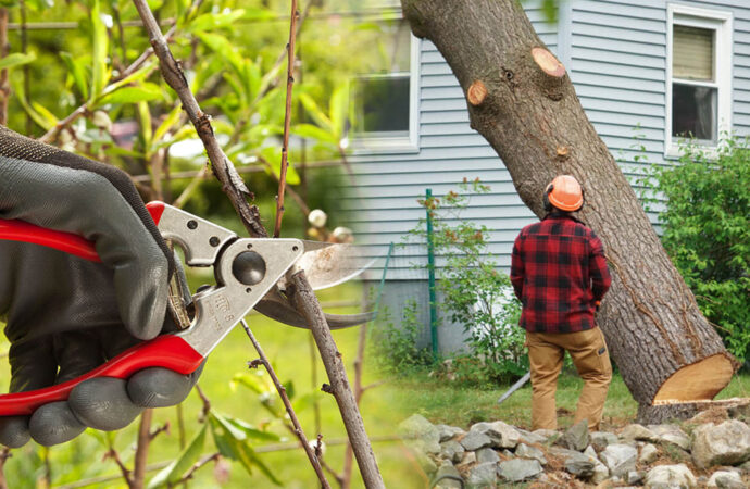 Tree pruning & tree removal-Parkland FL Tree Trimming and Stump Grinding Services-We Offer Tree Trimming Services, Tree Removal, Tree Pruning, Tree Cutting, Residential and Commercial Tree Trimming Services, Storm Damage, Emergency Tree Removal, Land Clearing, Tree Companies, Tree Care Service, Stump Grinding, and we're the Best Tree Trimming Company Near You Guaranteed!